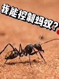 我能控制蚂蚁?